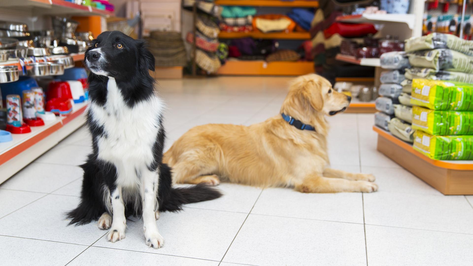 Tienda de animales en Pontevedra