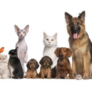 Tienda de animales en Pontevedra con servicio a domicilio